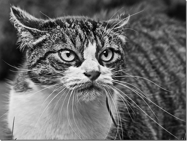 cat-1865546_1920